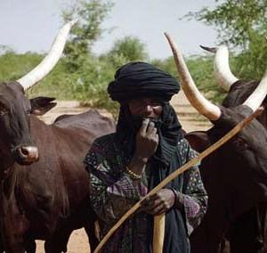Cattle rearers