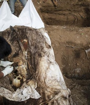 Human remains are retrieved from a mass grave at an abandoned camp in a jungle some three hundred meters from the border with Malaysia, in Thailand's southern Songkhla province May 2, 2015.