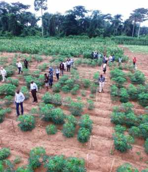 Cassava Weed Management Project,