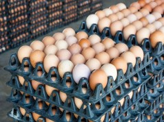 Crates-of-egg