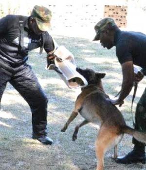 Training in dog handling