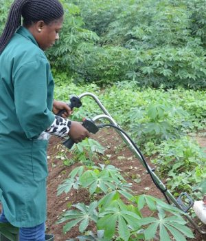 A woman using a mechanical weeder to weed in cassava farm