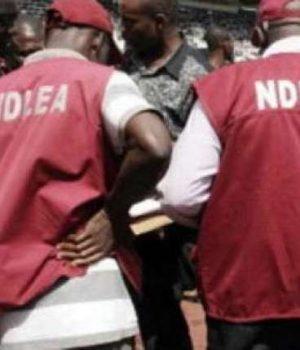 NDLEA-operatives