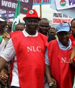 NLC members