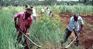 Farmers using crude implement