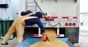 A worker takes a sample from an incoming truckload of soybeans at Peterson Farms Seed facility in Fargo, North Dakota, U.S., December 6, 2017