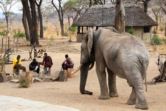 Elephant tramples farmer to death