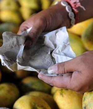 Artificial-ripening-of-mango