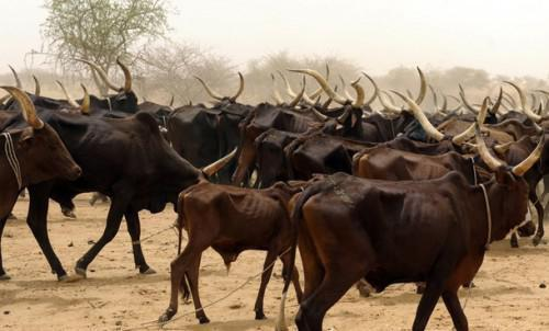 African Development Bank boosts Cameroon livestock, fish