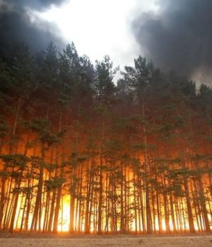 Wild fire sparked by heat waves