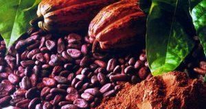 Ghana-cocoa