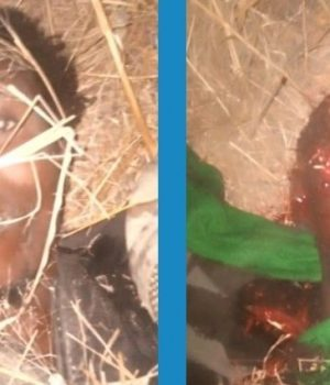 Boko Haram Commanders killed at Pulka